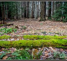 Mossy Logs by Mikell Herrick