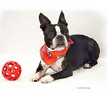 The Dog with the Red Ball by starlitestudio