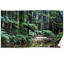 Aire River Redwoods Poster