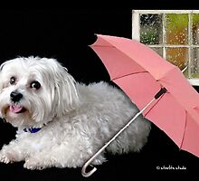 Singing in the Rain by starlitestudio