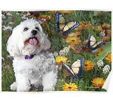 Sunny Chasing Butterflies Poster
