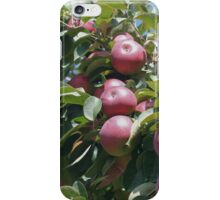 Red McIntosh Apples On The Tree iPhone Case/Skin