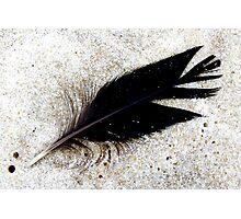 Feather  Photographic Print