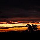 Evening Glow by GailD