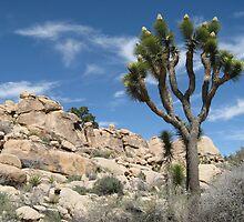 Joshua Tree by Aaron Paul Stanley