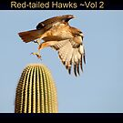 Red-tailed Hawks II by Kimberly Chadwick