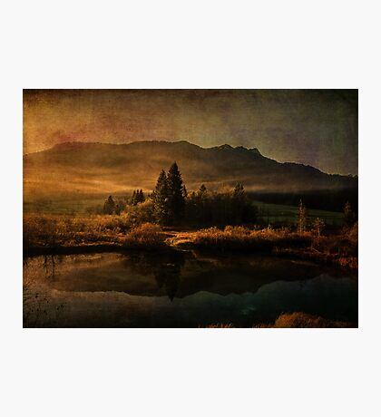 Scent of Pines Photographic Print