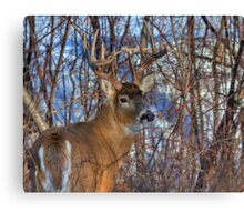 Nice looking 5 Pointer Canvas Print