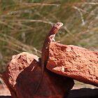 Outback Lizard by Aaron Paul Stanley