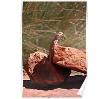 Outback Lizard Poster