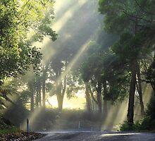 Morning sun at Mawbanna in far nor west Tasmania, Australia by phillip wise