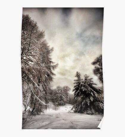 Snowy Woodland Walk Poster