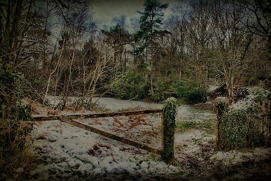 Gate To Quarry Pond by Dave Godden