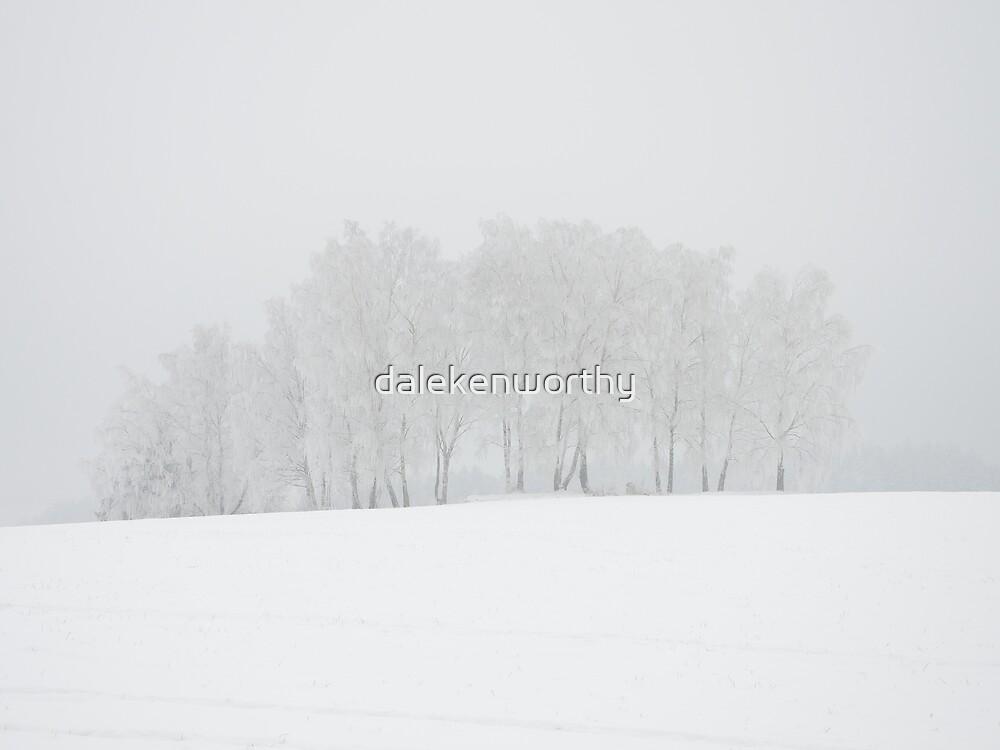 Birch trees in winter wonderland by dalekenworthy