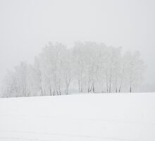 Birch trees in winter wonderland by dalekenworthy