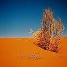 Dead Grass by AndyFeltonPix