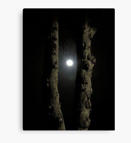 Moonlight: Framed Canvas Print