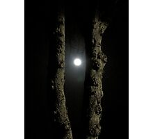 Moonlight: Framed Photographic Print