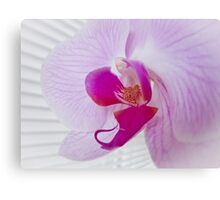 Pink Orchid (Phalaenopsis) Canvas Print