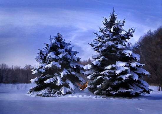 Hiding In the Spruce by Kathy Weaver