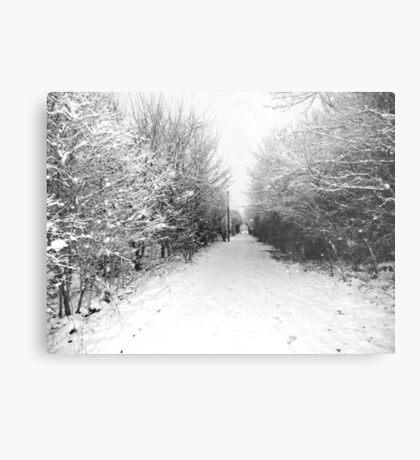 Snow. Metal Print