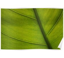 Leaf Abstract 2 Poster