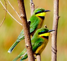 Cinnamon Chested Bee Eater by Pravine Chester