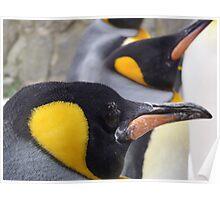 Emperor Penguins Poster