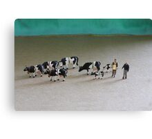 Bert can't believe he got such a great deal on ebay for this herd of Belted Galloways! Canvas Print