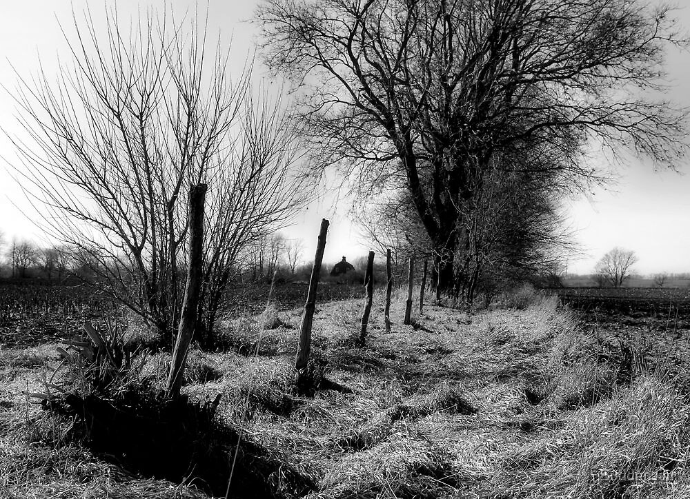 Wind Break by SuddenJim