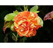 Multi Colored rose Photographic Print