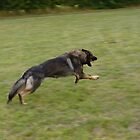 german shepherd running by elsiebarge