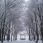 Winter Band Stand by appfoto