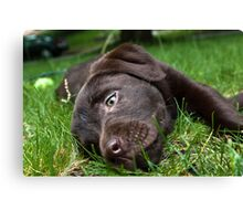 Chocolate Puppy Canvas Print