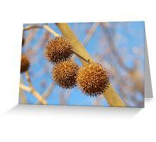 Chestnut Tree Greeting Card