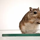 Gerbil pose by Inzaie