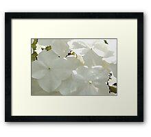 Hydrengea Framed Print