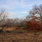 Fleeting Autumn by Paul Sturdivant