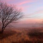 Early Dawn by Paul Sturdivant