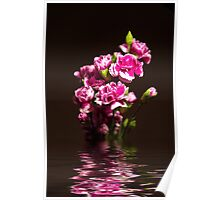 Carnations flood Poster
