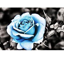 Blue Rose Photographic Print