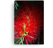 Bottle Brush Glow Canvas Print