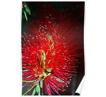 Bottle Brush Glow Poster