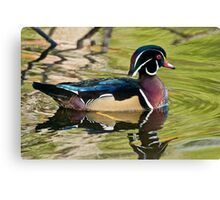 Male Wood Duck Canvas Print