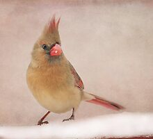 Mrs. Cardinal's Bad Hair Day ~ by Renee Blake