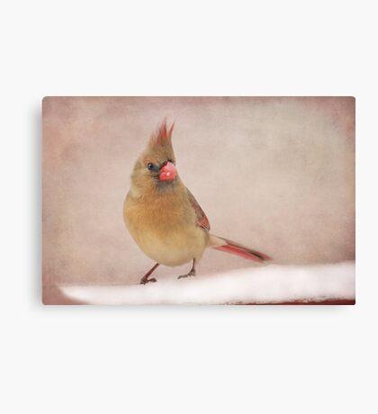 Mrs. Cardinal's Bad Hair Day ~ Canvas Print