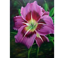 Lavender Daylily Photographic Print