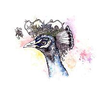 Rainbow Peacock Photographic Print
