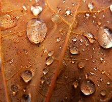 autumns orange drop~ by Brandi Burdick