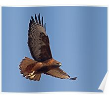 012713 Red Tailed Hawk Poster